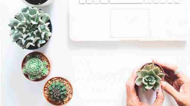 Benefits of succulent plants in home office